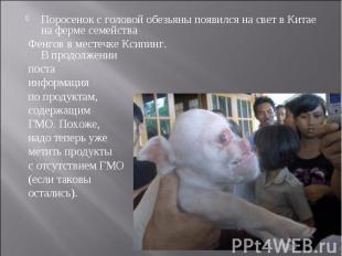 Поросенок с головой обезьяны появился на свет в Китае на ферме семейства Фенгов
