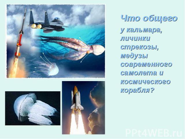 Что общегоу кальмара, личинки стрекозы, медузы современного самолета и космического корабля?
