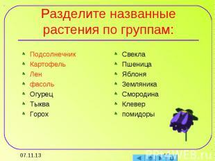 Разделите названные растения по группам: ПодсолнечникКартофельЛенфасольОгурецТык