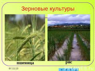 Зерновые культуры пшеницарис