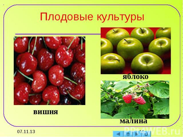 Плодовые культуры вишняяблокомалина