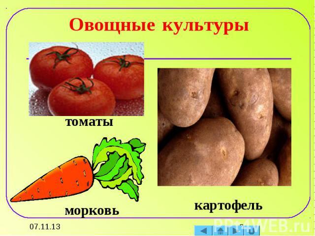 Овощные культуры томатыморковькартофель