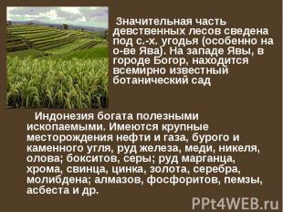 Значительная часть девственных лесов сведена под с.-х. угодья (особенно на о-ве