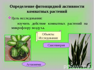 Определение фитонцидной активности комнатных растений Цель исследования: изучить
