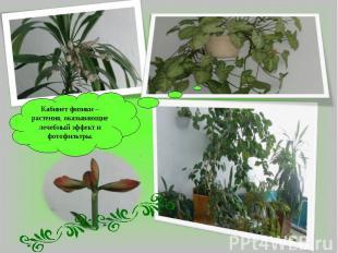 Кабинет физики –растения, оказывающие лечебный эффект и фотофильтры.