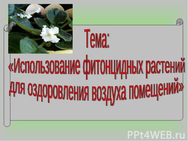 Тема: «Использование фитонцидных растений для оздоровления воздуха помещений»