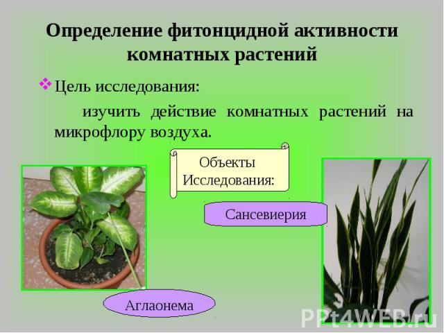 Определение фитонцидной активности комнатных растений Цель исследования: изучить действие комнатных растений на микрофлору воздуха.