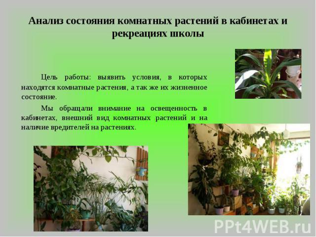 Анализ состояния комнатных растений в кабинетах и рекреациях школы Цель работы: выявить условия, в которых находятся комнатные растения, а так же их жизненное состояние.Мы обращали внимание на освещенность в кабинетах, внешний вид комнатных растений…