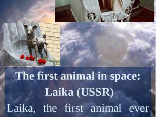 The first animal in space: Laika (USSR)Laika, the first animal ever sent to spac