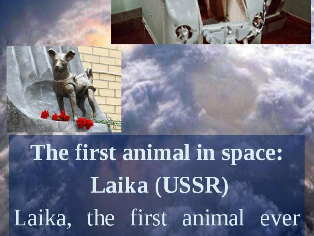 The first animal in space: Laika (USSR)Laika, the first animal ever sent to space, rode to orbit in Sputnik II on the 3rd of November, 1957