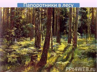 Папоротники в лесу