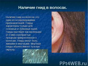 Наличие гнид в волосах. Наличие гнид на волосах это один из неопровержимых приз