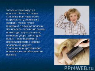Головные вши живут на волосистой части головы. Головные вши чаще всего встречают