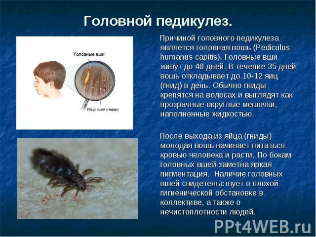Головной педикулез. Причиной головного педикулеза является головная вошь (Pediculus humanus capitis). Головные вши живут до 40 дней. В течение 35 дней вошь откладывает до 10-12 яиц (гнид) в день. Обычно гниды крепятся на волосах и выглядят как прозр…