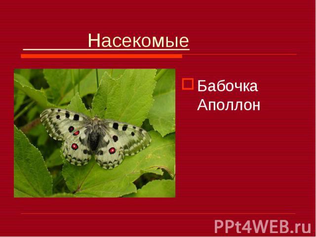 Насекомые Бабочка Аполлон
