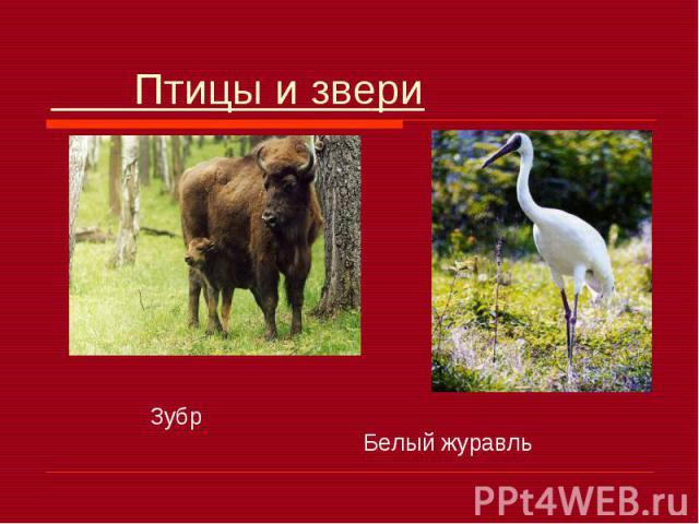Птицы и звери Зубр Белый журавль