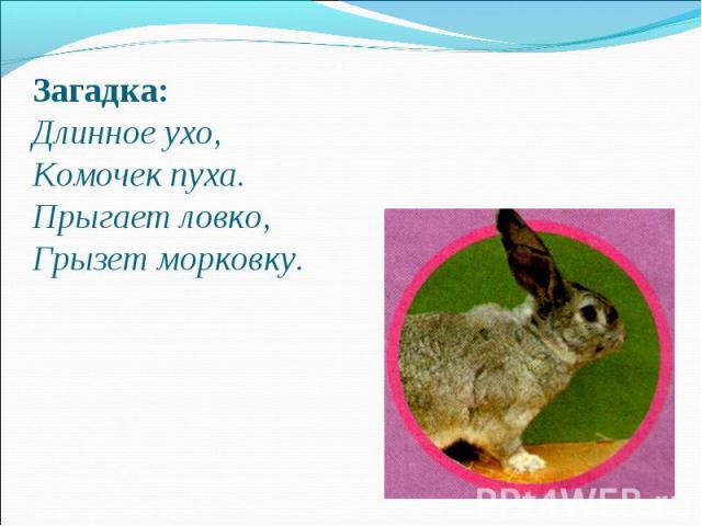 Загадка: Длинное ухо,Комочек пуха.Прыгает ловко, Грызет морковку.