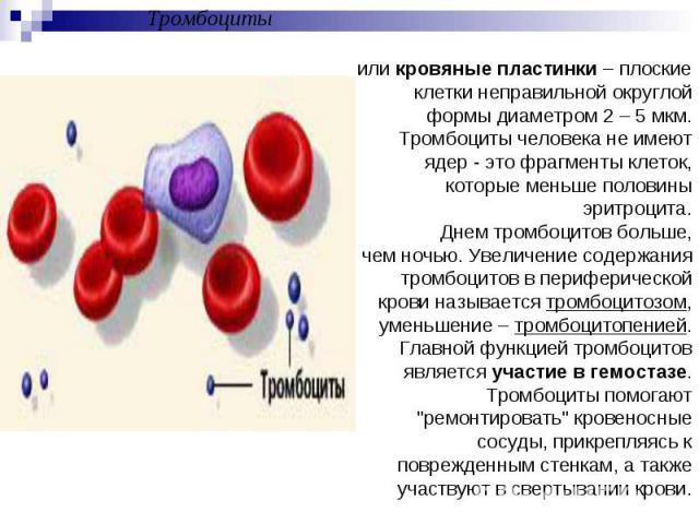 Тромбоцитыили кровяные пластинки – плоские клетки неправильной округлой формы диаметром 2 – 5 мкм. Тромбоциты человека не имеют ядер - это фрагменты клеток, которые меньше половины эритроцита.Днем тромбоцитов больше, чем ночью. Увеличение содержания…