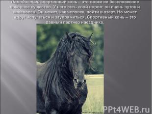 Породистый спортивный конь – это вовсе не бессловесное покорное существо. У него
