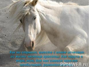 Как ни странно, вместе с конем исчезает из жизни частица красоты. Как паруса в м