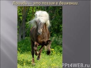Лошадь — это поэзия в движении.