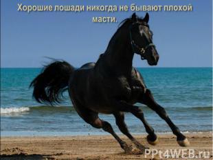 Хорошие лошади никогда не бывают плохой масти.