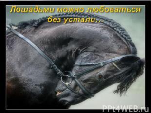 Лошадьми можно любоваться без устали…