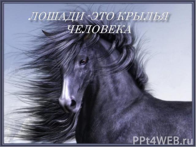 Лошади -это крылья человека