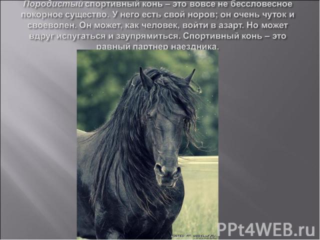 Породистый спортивный конь – это вовсе не бессловесное покорное существо. У него есть свой норов; он очень чуток и своеволен. Он может, как человек, войти в азарт. Но может вдруг испугаться и заупрямиться. Спортивный конь – это равный партнер наездника.