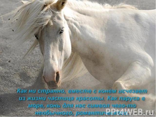 Как ни странно, вместе с конем исчезает из жизни частица красоты. Как паруса в море, конь для нас символ чего-то необычного, романтического.