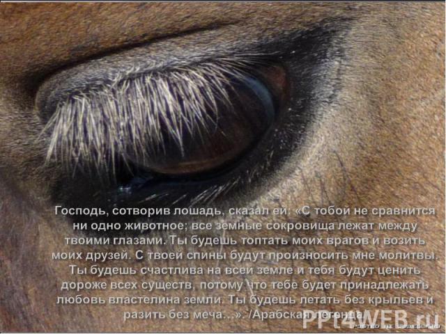 Господь, сотворив лошадь, сказал ей: «С тобой не сравнится ни одно животное; все земные сокровища лежат между твоими глазами. Ты будешь топтать моих врагов и возить моих друзей. С твоей спины будут произносить мне молитвы. Ты будешь счастлива на все…