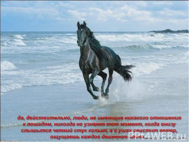 да, действительно, люди, не имеющие никакого отношения к лошадям, никогда не узнают тот момент, когда внизу слышытся четкий стук копыт, а в ушах свистит ветер, ощущаешь каждое движение плеча...