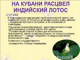 На Кубани расцвел индийский лотос 17.07.2006 В Краснодарском крае расцвел так