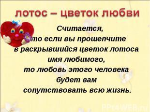лотос – цветок любви Считается, что если вы прошепчите в раскрывшийся цветок лот
