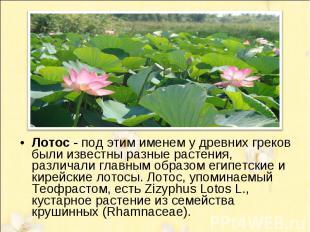 Лотос - под этим именем у древних греков были известны разные растения, различал