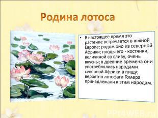 Родина лотоса В настоящее время это растение встречается в южной Европе; родом о