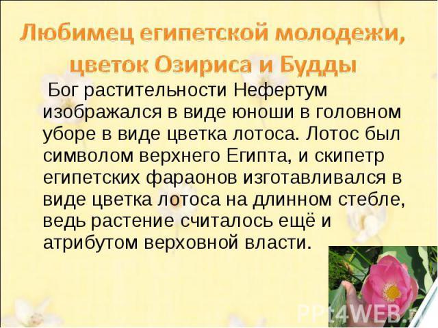 Любимец египетской молодежи, цветок Озириса и Будды Бог растительности Нефертум изображался в виде юноши в головном уборе в виде цветка лотоса. Лотос был символом верхнего Египта, и скипетр египетских фараонов изготавливался в виде цветка лотоса на …