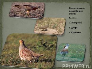 Биологическое разнообразие фауны 1.Сокол2. Жаворонок3. Дрофа4. Куропатка