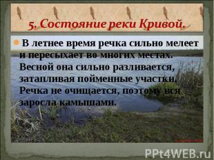 5. Состояние реки Кривой. В летнее время речка сильно мелеет и пересыхает во мно
