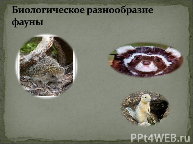 Биологическое разнообразие фауны