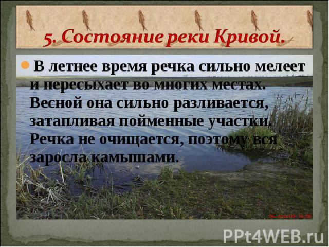 5. Состояние реки Кривой. В летнее время речка сильно мелеет и пересыхает во многих местах. Весной она сильно разливается, затапливая пойменные участки. Речка не очищается, поэтому вся заросла камышами.