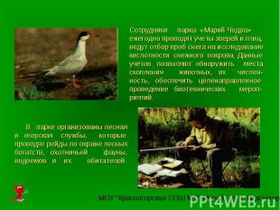 Сотрудники парка «Марий Чодра» ежегодно проводят учеты зверей и птиц, ведут отбо
