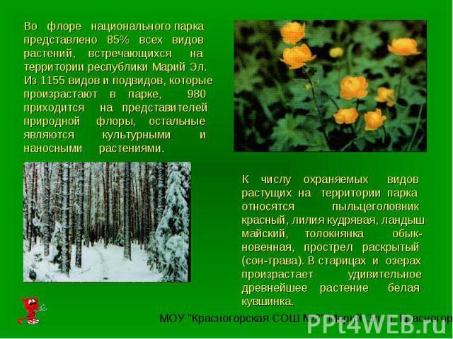 Во флоре национального парка представлено 85% всех видов растений, встречающихся на территории республики Марий Эл. Из 1155 видов и подвидов, которые произрастают в парке, 980 приходится на представителей природной флоры, остальные являются культурн…