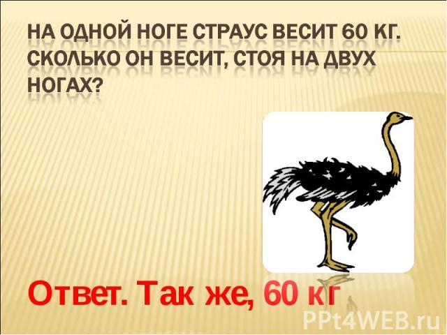 На одной ноге страус весит 60 кг. Сколько он весит, стоя на двух ногах? Ответ. Так же, 60 кг