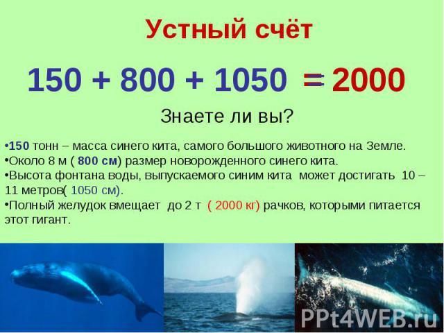 Устный счёт 150 + 800 + 1050 =Знаете ли вы?150 тонн – масса синего кита, самого большого животного на Земле.Около 8 м ( 800 см) размер новорожденного синего кита.Высота фонтана воды, выпускаемого синим кита может достигать 10 – 11 метров( 1050 см).П…