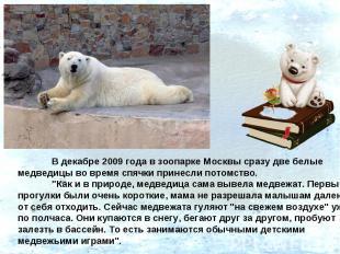 В декабре 2009 года в зоопарке Москвы сразу две белые медведицы во время спячки