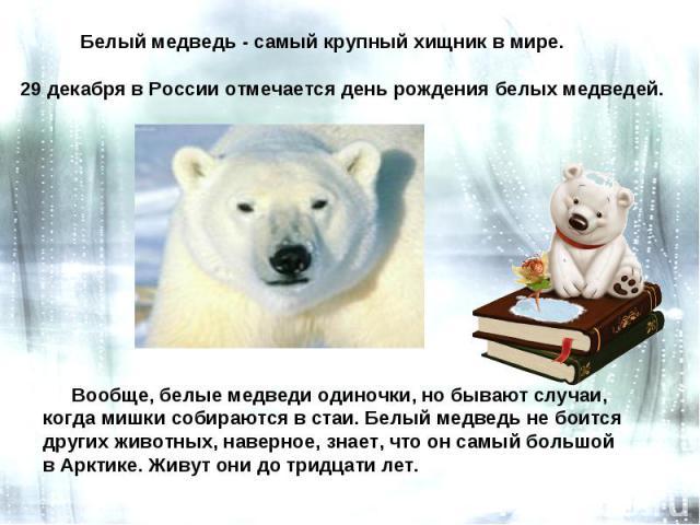 Белый медведь - самый крупный хищник в мире. 29 декабря в России отмечается день рождения белых медведей. Вообще, белые медведи одиночки, но бывают случаи, когда мишки собираются в стаи. Белый медведь не боится других животных, наверное, знает, что …