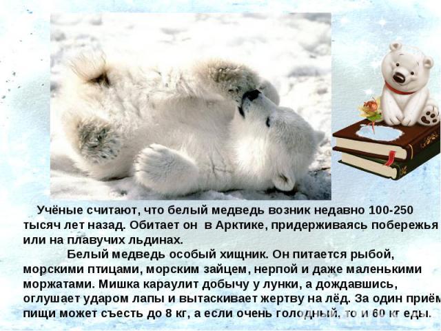 Учёные считают, что белый медведь возник недавно 100-250 тысяч лет назад. Обитает он в Арктике, придерживаясь побережья или на плавучих льдинах. Белый медведь особый хищник. Он питается рыбой, морскими птицами, морским зайцем, нерпой и даже маленьк…