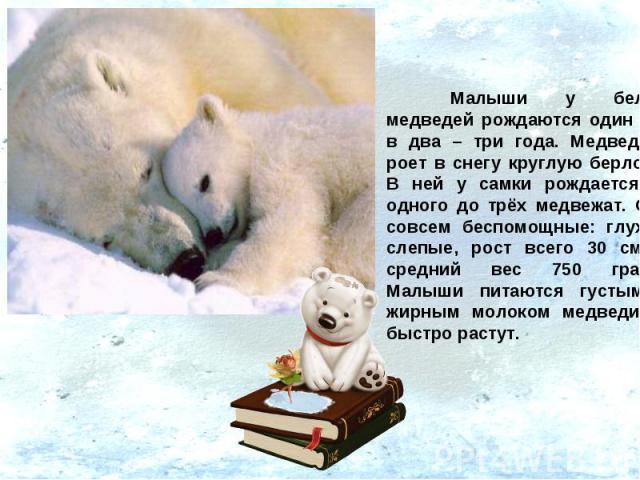 Малыши у белых медведей рождаются один раз в два – три года. Медведица роет в снегу круглую берлогу. В ней у самки рождается от одного до трёх медвежат. Они совсем беспомощные: глухие, слепые, рост всего 30 см, а средний вес 750 грамм. Малыши питаю…
