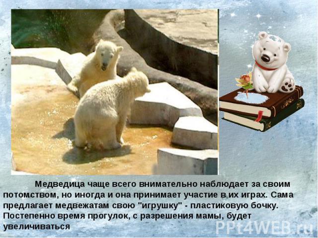 Медведица чаще всего внимательно наблюдает за своим потомством, но иногда и она принимает участие в их играх. Сама предлагает медвежатам свою